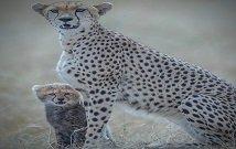 Kenya flying camp safari