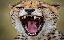 Masai Mara Budget Tours