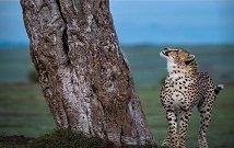 Safaris in Amboseli Kenya