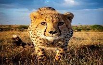 Safaris in Serengeti Tanzania