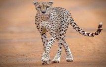 Travel to Masai Mara Kenya