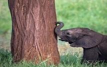 Kenya Private Safaris