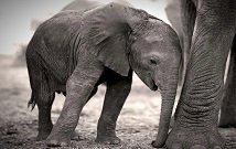 Kenya Amboseli safaris