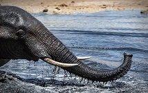 Tsavo East Safaris in Kenya