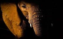 Samburu luxury safari
