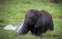 Best Kenya Trip