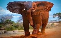 Best Safaris in Masai Mara