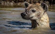 kenya group safaris