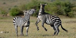 Book Best safaris in Kenya