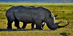 Best Kenya and Tanzania safaris