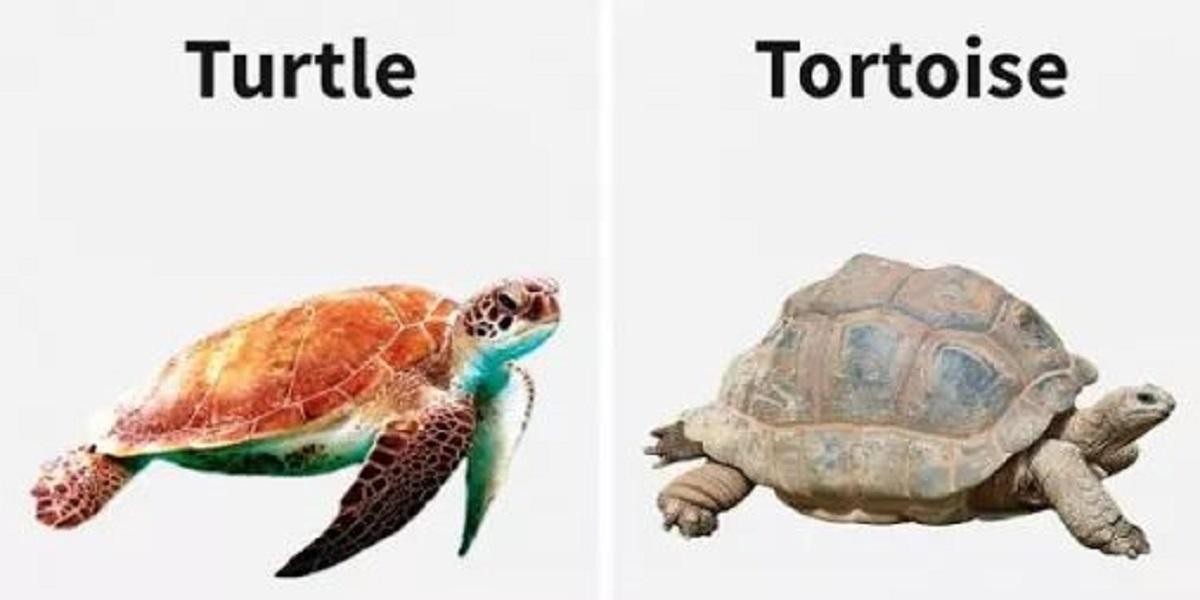 Tortoise and Turtle Shells