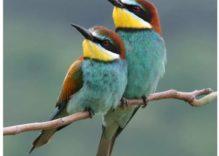 Endemic Birds species in Nigeria